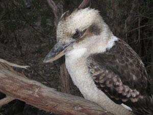 Garden Ideas Victoria Australia attracting birds | sustainable gardening australia