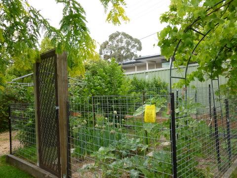 Sustainable garden in Canberra Sustainable Gardening Australia