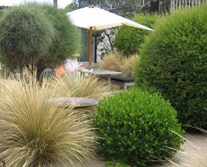 Sustainable Garden Design and landscaping SGA