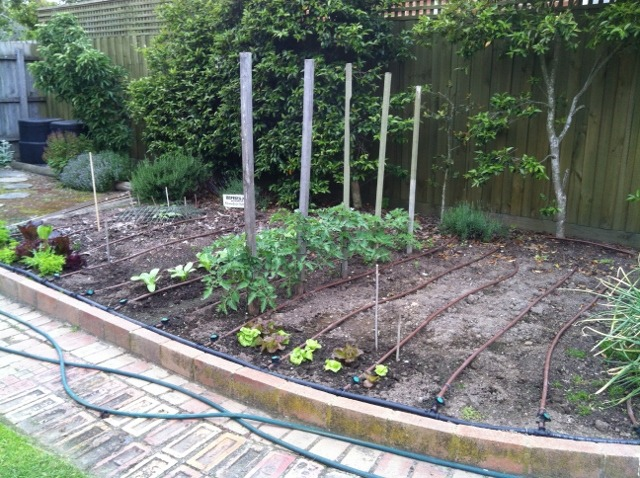 Watering vegetable gardens sustainable gardening australia for Watering vegetable garden