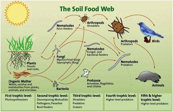living soil diagram