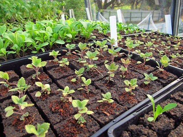 Gardening - Start Your Seedlings NOW