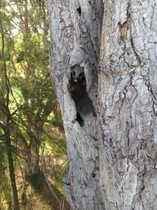 wildlife up tree