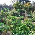 Tour of Mary & Robert's Garden @ Heidelberg | Heidelberg | Victoria | Australia