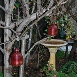 Open Garden - Ashwood @ Ashwood | Victoria | Australia