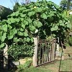 Open Garden - Mt. Waverley @ Mount Waverley | Victoria | Australia