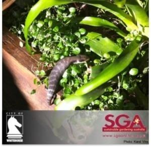 Garden Design Garden Design with Sustainable Gardening Australia