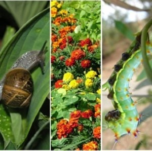 Low Environmenal Impact Solutions to Garden Pests - Penny Woodward @  Footscray City College - Environmental Science Centre;  | Footscray | Victoria | Australia