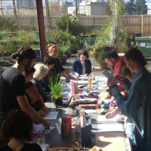 Native Plant Propagation @ St. Kilda Indigenous Nursery Co-op | Port Melbourne | Victoria | Australia