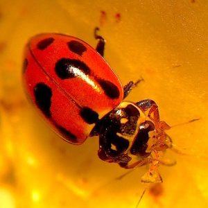 Master Class - Good Bugs vs. Bad Bugs - Angelica Cameron @ Colliingwood College   Collingwood   Victoria   Australia