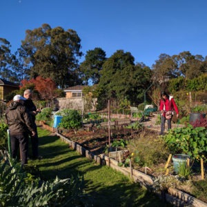 Garden Tour and Workshop - Setting Up a Community Garden @ Nunawading Community Garden (near Basketball Stadium) | Blackburn North | Victoria | Australia