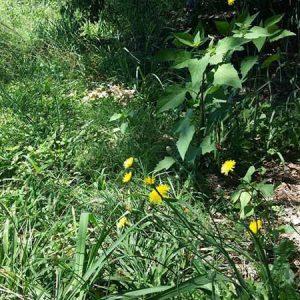 Weeds - From Foe to Friend @ Brisbane, The Gardener's Wall   Yeronga   Queensland   Australia