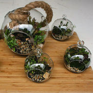 Creating a Native Plant Terrarium @ St. Kilda Indigenous Nursery Co-op | Port Melbourne | Victoria | Australia