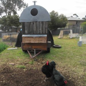 Partnering with Chooks in a Sustainable Garden / Backyard Farm @ Templestowe College | Templestowe Lower | Victoria | Australia