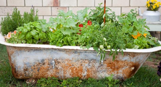 Summer Garden photos   Sustainable Gardening Australia