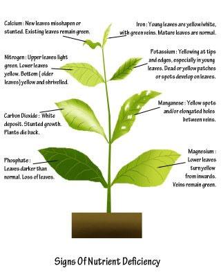 Plant nutrients 101 | Sustainable Gardening Australia