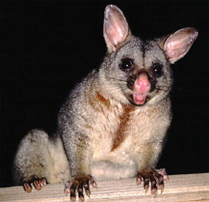 howto stop possums eating vegetable garden
