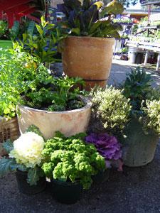 Edible gardens in pots | Sustainable Gardening Australia