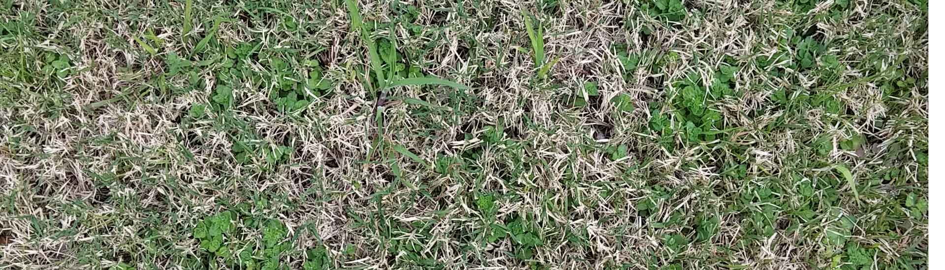 White Curl Grub Control Sustainable Gardening Australia