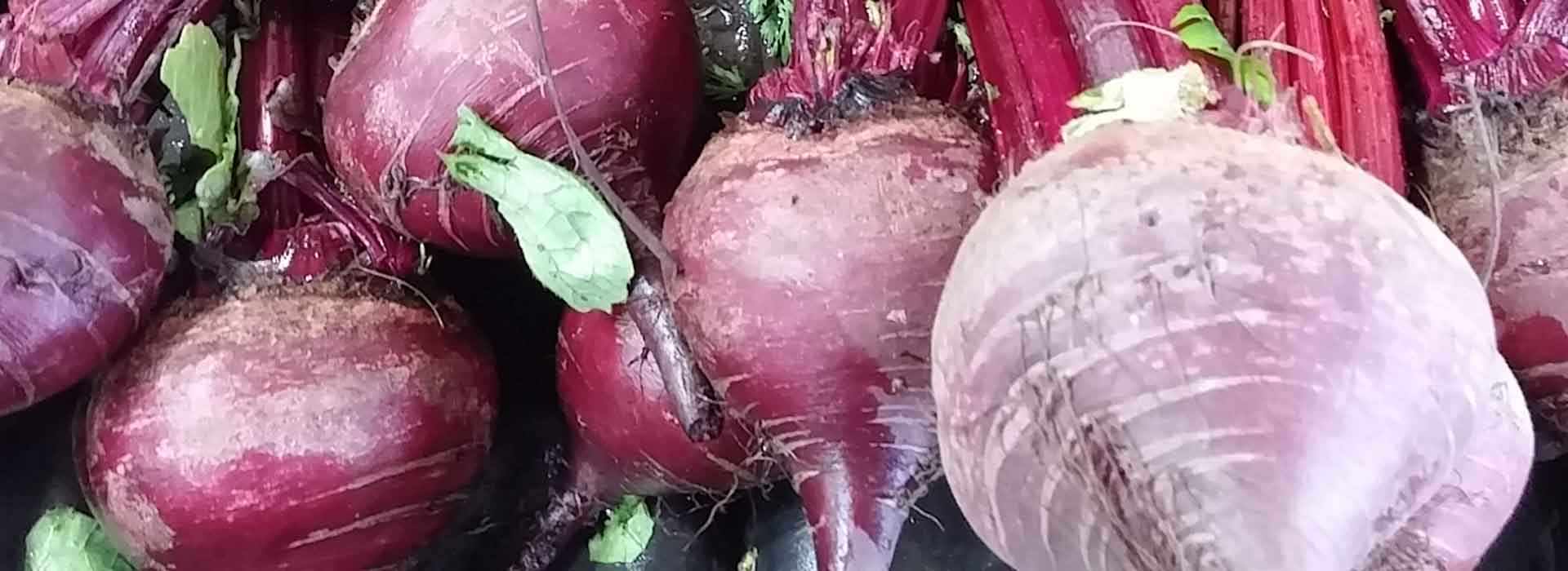 Growing Beetroot Or Beets In Your Vegetable Garden How To Grow Beet Or Beetroot Youtube