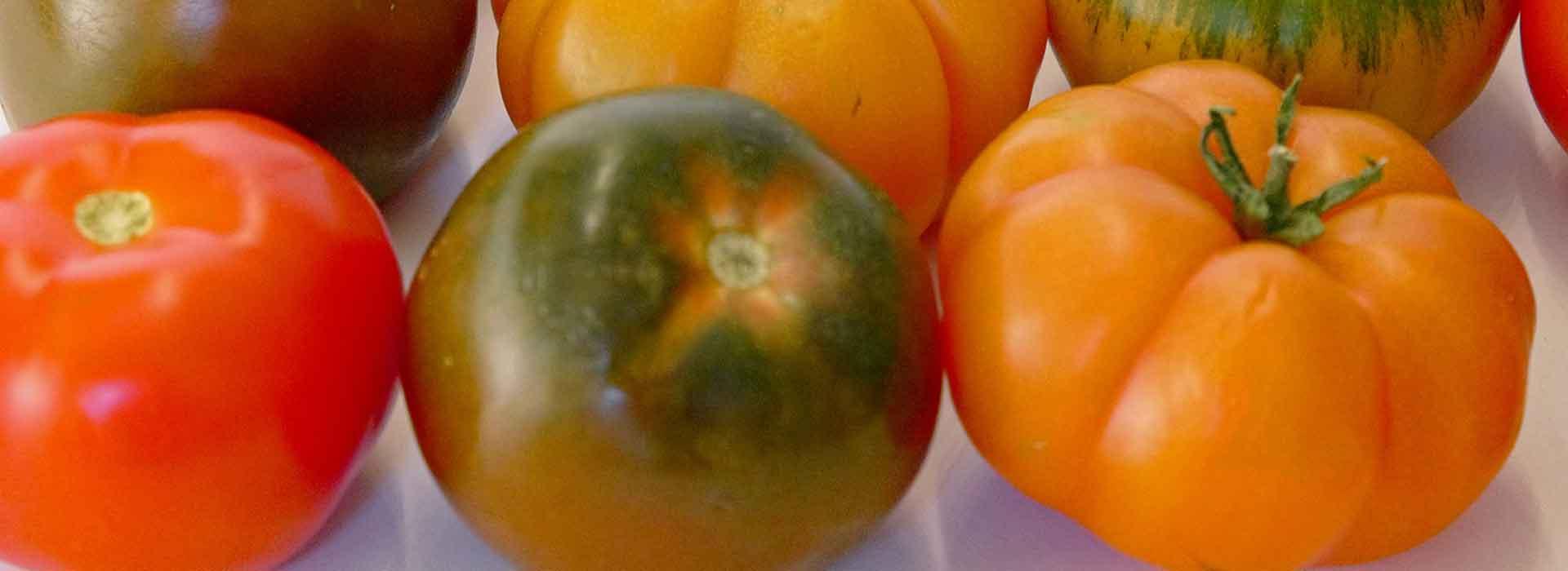 Top tomato varieties   Sustainable Gardening Australia