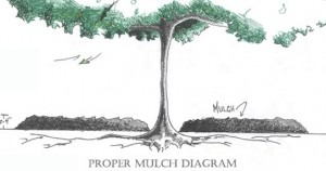 MulchingDiagram