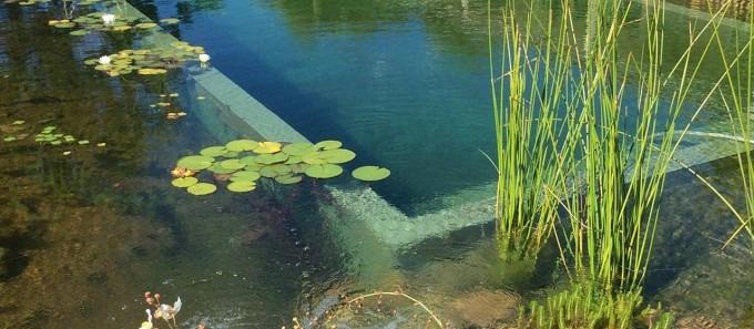 naturalswimpools.com.au