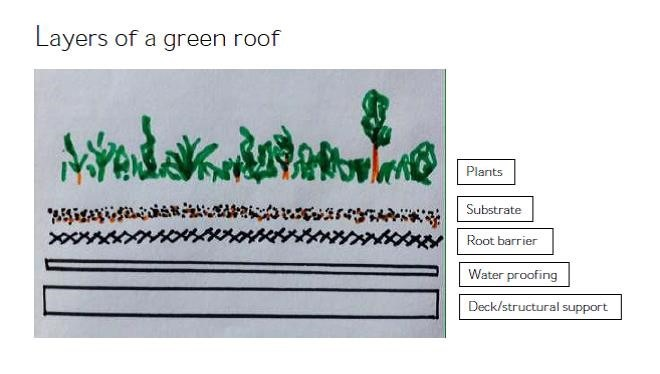 Layers of a green roof