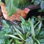 Zofia's garden