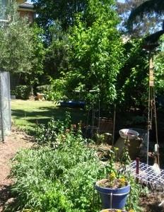 A permaculture garden | Sustainable Gardening Australia