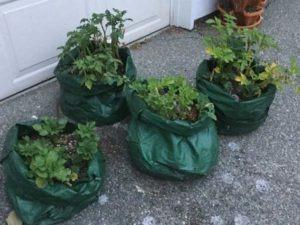veggiesinbags