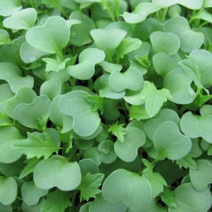 Growing Microgreens at Home @ Edendale Community Enviroment Farm | Eltham | Victoria | Australia