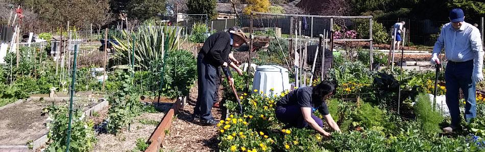 Community Gardens Sustainable Gardening Australia