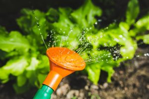 The Art of Watering @ Macleod Organic Community Garden, Somers Ave, Macleod VIC 3085, Australia