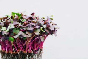 Microgreens - Online Master Class delivered via Zoom