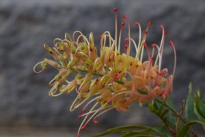 Landscaping with Native Plants @ Delivered Online Via Zoom