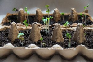 Growing from Seed @ Delivered Online Via Zoom