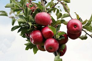 Growing Backyard Fruit Trees @ Online - Via Zoom