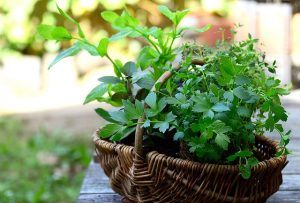 Growing Herbs for Food and Medicine @ Online - Via Zoom
