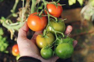 Grow Into Summer - Vegie Gardening Master Class @ Online - Via Zoom